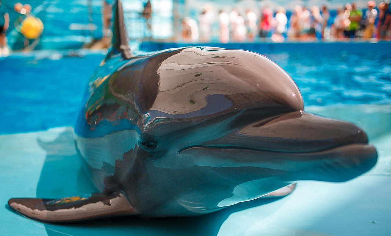 анапа дельфины картинки можно приобрести как